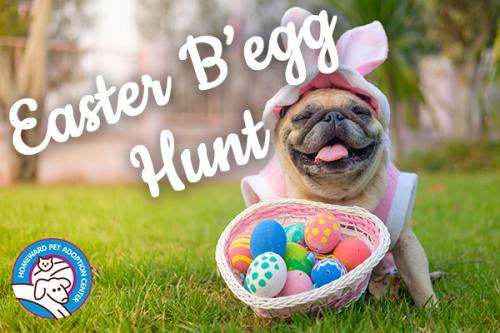 easter b'egg hunt