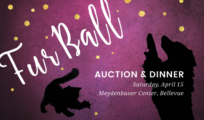 fur-ball-auction-event-page-image