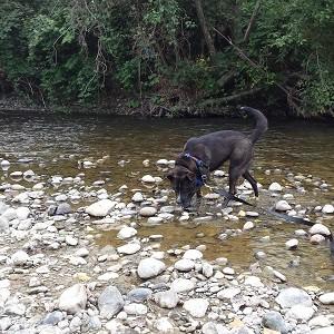 Arlo River2 (2)