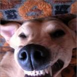 smiling_dog2