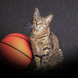 March Meowness - website image