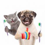 catdogtoothbrush (300x262)